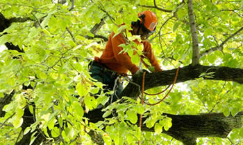 Tree Trimming in Salt Lake City UT Tree Trimming Services in Salt Lake City UT Tree Trimming Professionals in Salt Lake City UT Tree Services in Salt Lake City UT Tree Trimming Estimates in Salt Lake City UT Tree Trimming Quotes in Salt Lake City UT