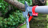Tree Pruning Services in Salt Lake City UT