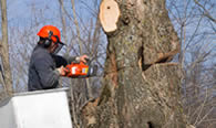 Tree Removal in Salt Lake City UT